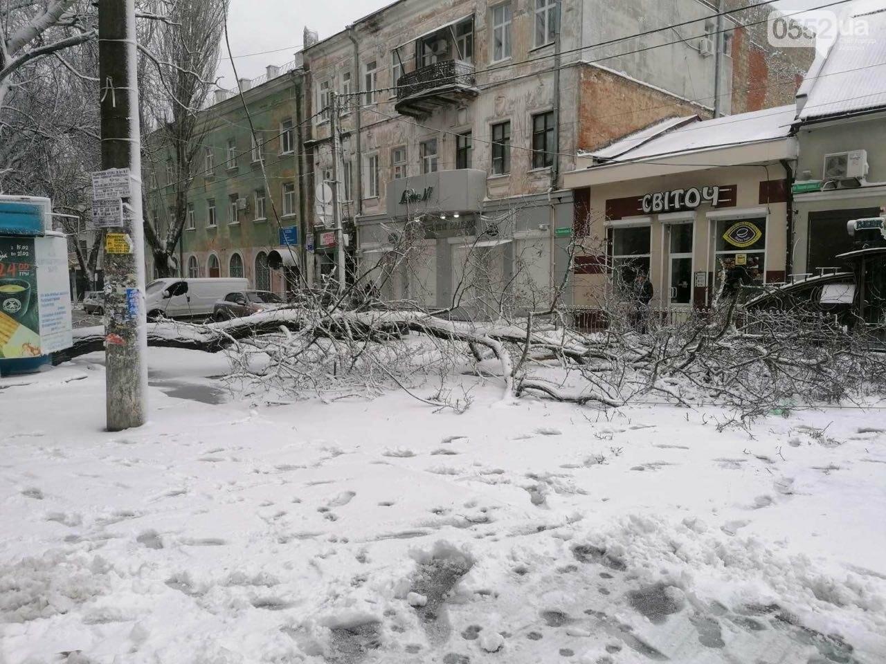 Древопад в Херсоне сегодня: штормовой ветер валит деревья на машины и автобусные остановки, фото-2