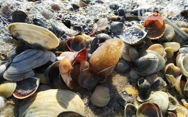 Горы норвежских омаров, раков и гребешков и выбросил шторм из Черного моря на Херсонщине, фото-2