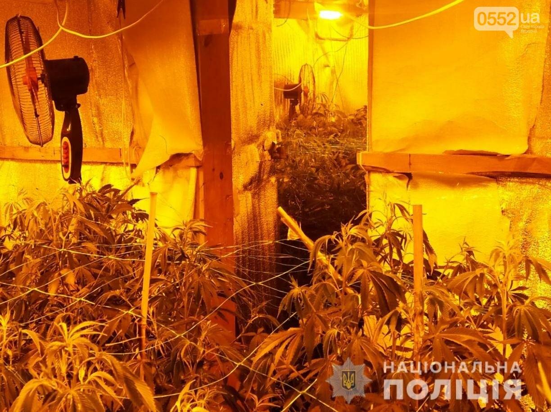 Нация под кайфом: элитную марихуану на 4 миллиона вырастили под Киевом селекционеры из Херсона, фото-4