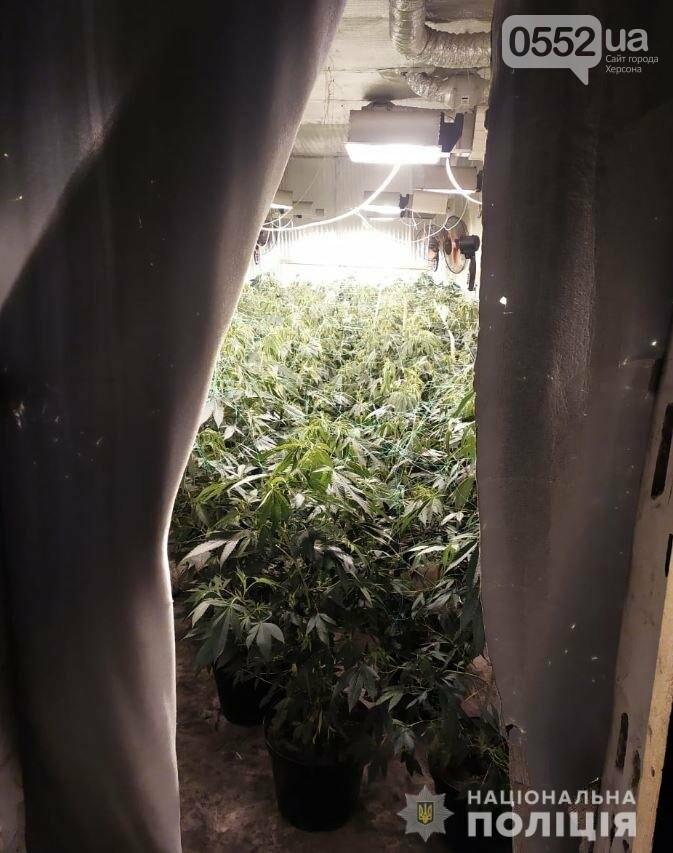 Нация под кайфом: элитную марихуану на 4 миллиона вырастили под Киевом селекционеры из Херсона, фото-2