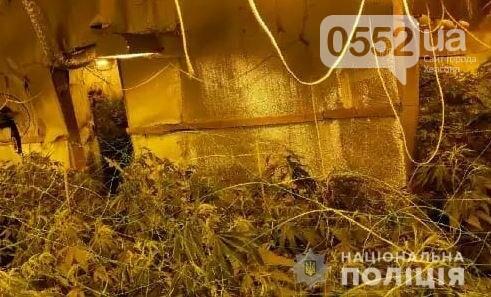 Нация под кайфом: элитную марихуану на 4 миллиона вырастили под Киевом селекционеры из Херсона, фото-5