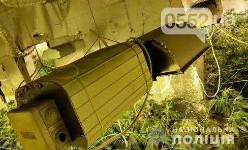 Нация под кайфом: элитную марихуану на 4 миллиона вырастили под Киевом селекционеры из Херсона, фото-1