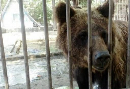 Херсонські активісти продовжують боротьбу за звіринець у Гідропарку, фото-1