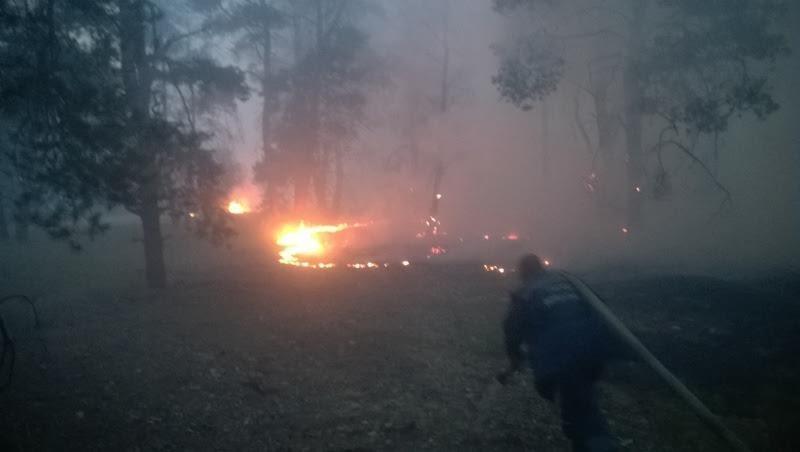 У Голопристанському районі ліквідовано лісову пожежу на площі 20 га, фото-1