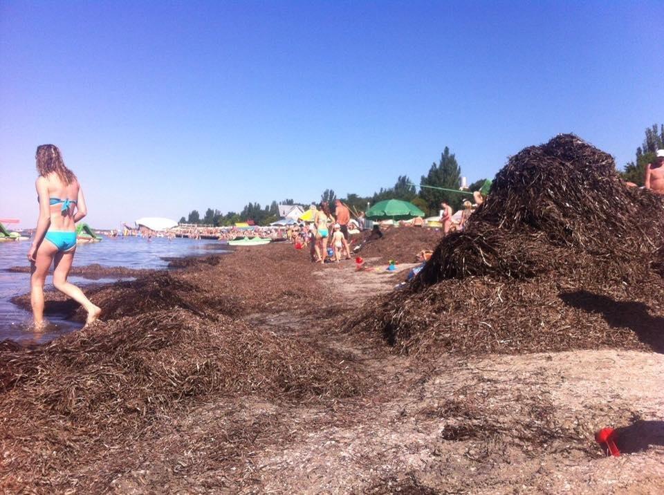 Пляжи на херсонском морском побережье утопают в водорослях  , фото-1