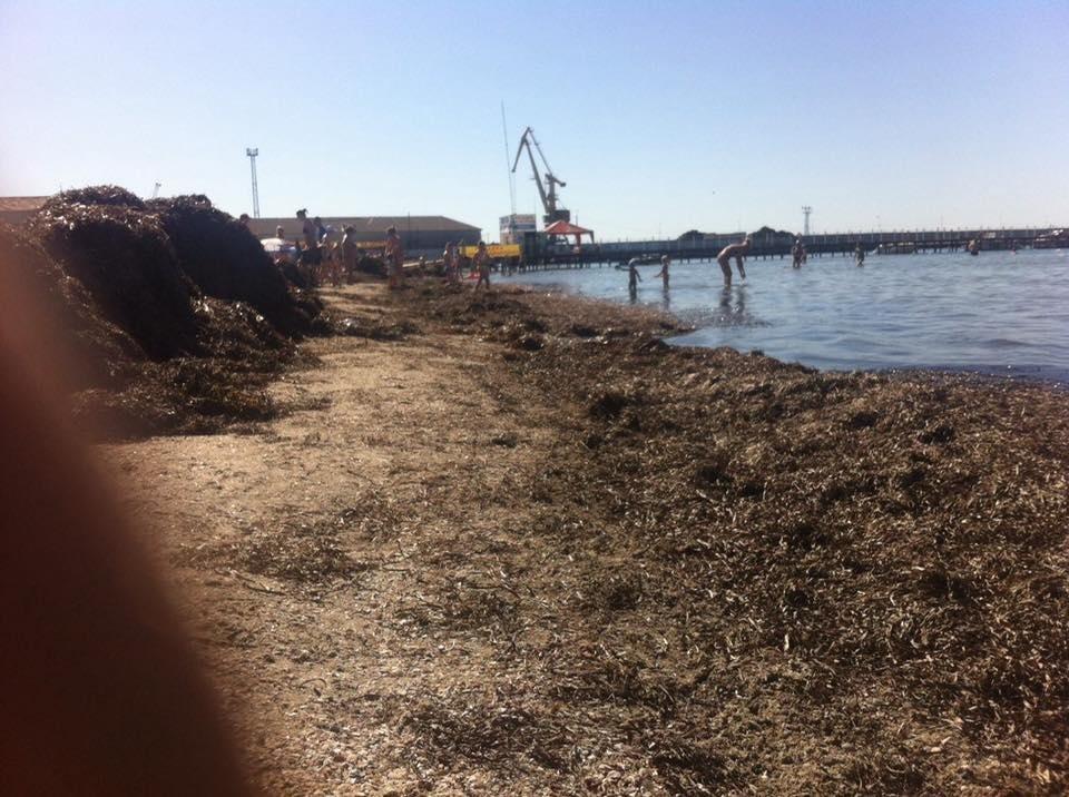Пляжи на херсонском морском побережье утопают в водорослях  , фото-2