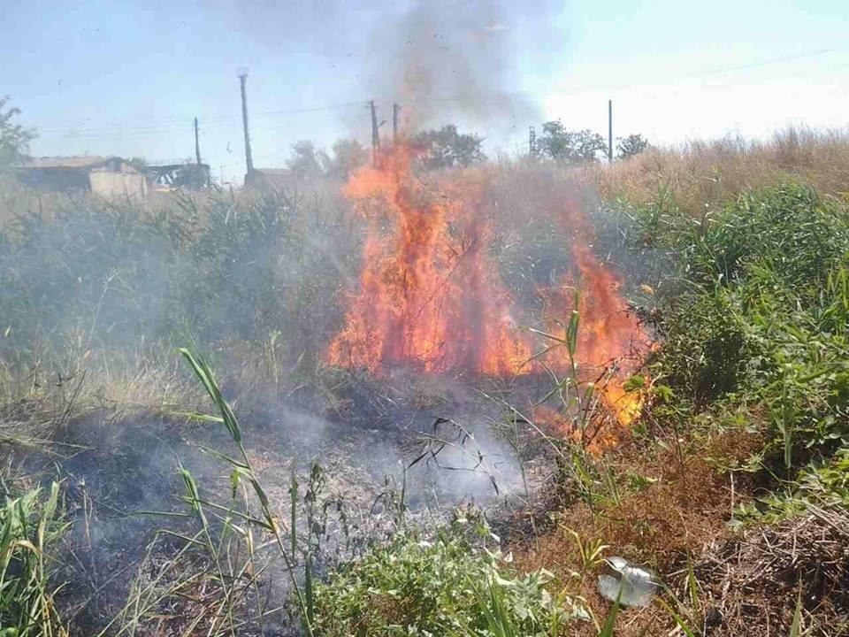 Минулої доби ліквідовано 7 пожеж сухої трави та сміття, фото-1