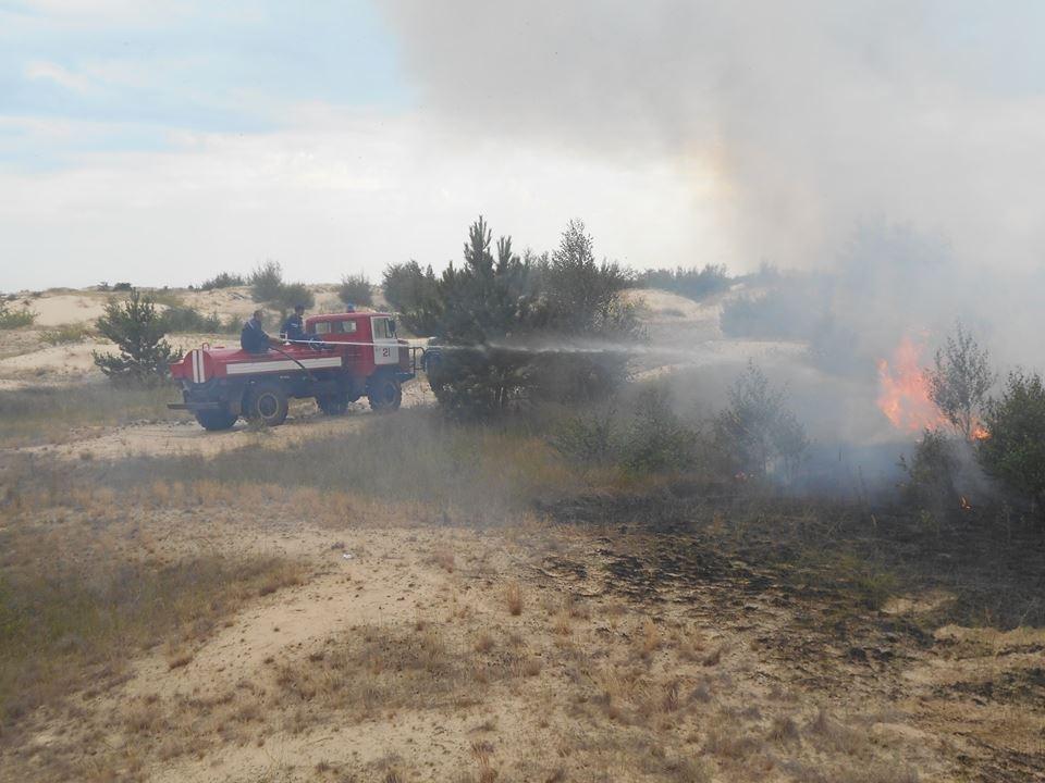 На Херсонщині лісова пожежа, фото-1