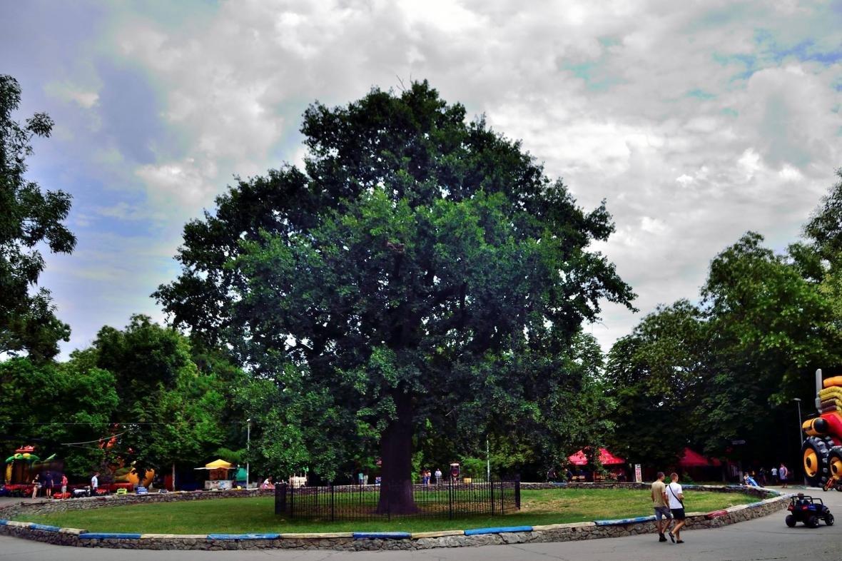 """Херсонець про парк у центрі: """"Чи то Прип'ять, чи то Колізей"""", фото-1"""