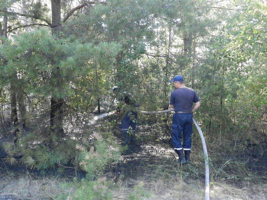 На Херсонщині знову лісові пожежі, фото-2