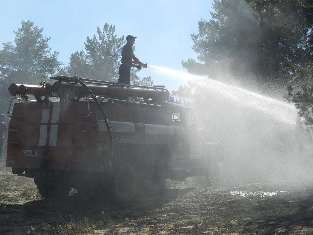 На Херсонщині знову лісові пожежі, фото-1