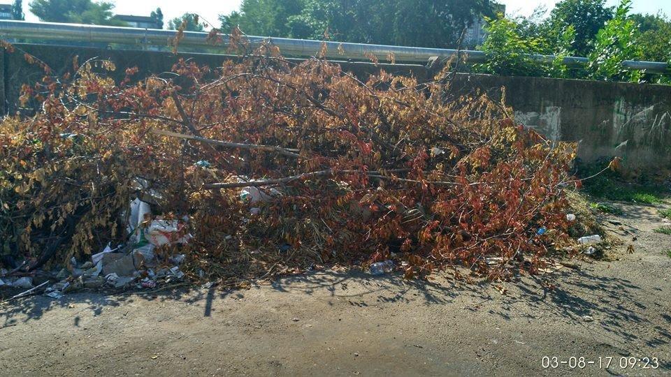 На Херсонщине проблема мусора набирает масштабы, фото-1