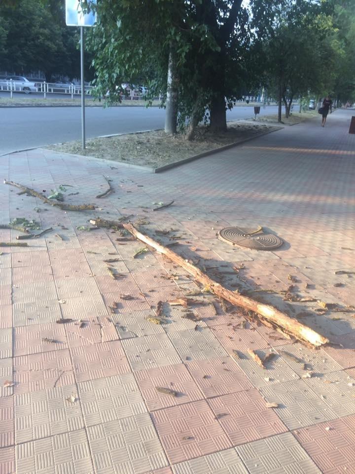 В Херсоне не проводят санитарную обрезку деревьев?, фото-1