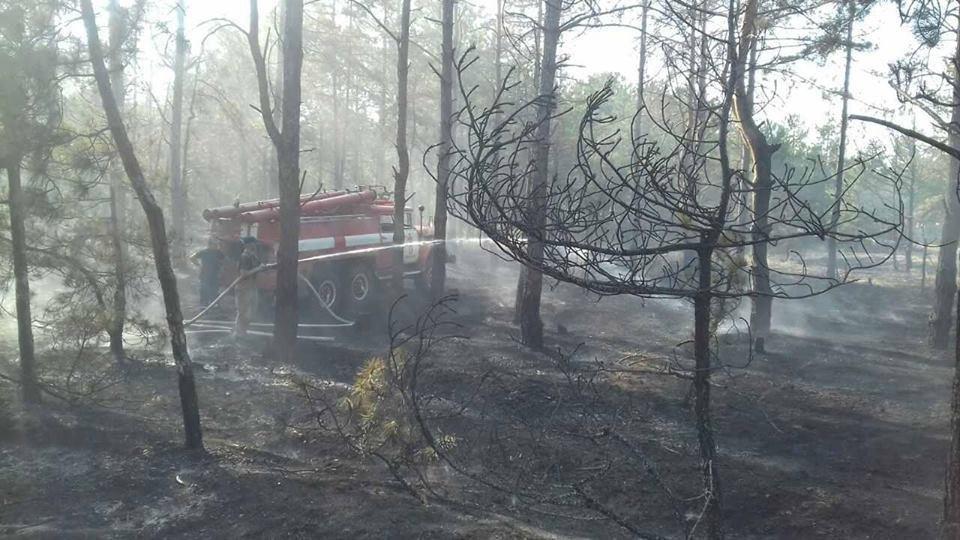 Протягом доби рятувальники 11 разів залучалися до гасіння пожеж в екосистемах, фото-2
