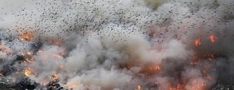 Пожары на городской свалке доставляют дискомфорт херсонцам, фото-1