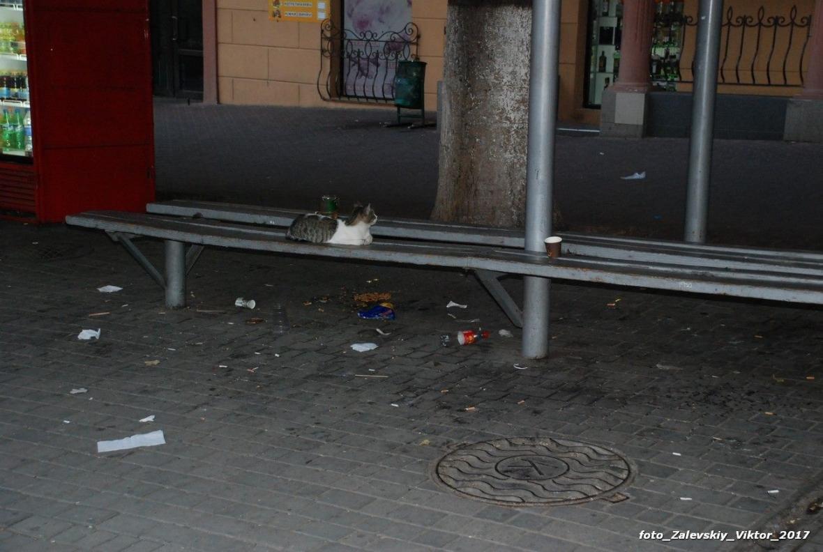 Херсонцы не любят свой город? (фото), фото-3