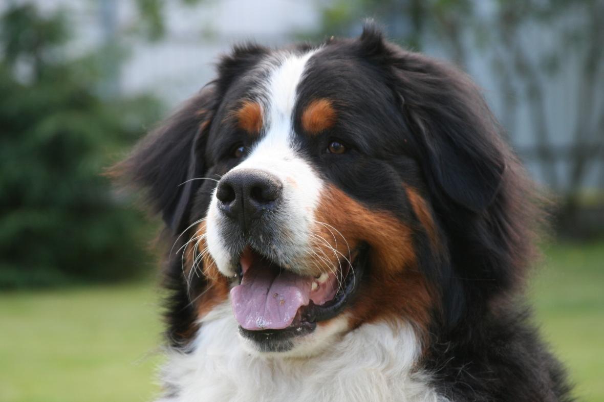 В Херсоне травят животных: пес умер, хозяйка в больнице, фото-1