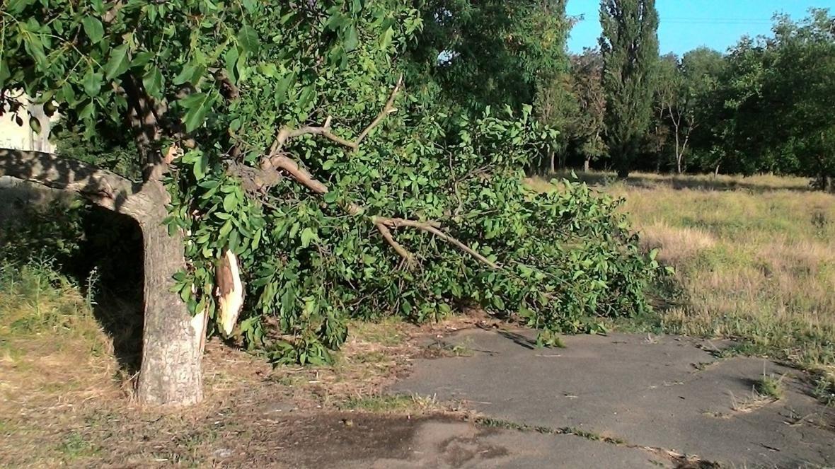 Непогода наделала бед в херсонском парке (фото), фото-2