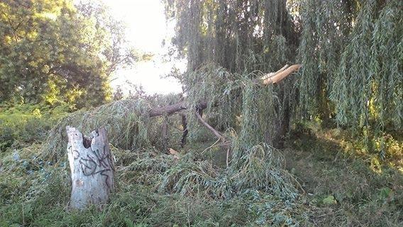 Непогода наделала бед в херсонском парке (фото), фото-1