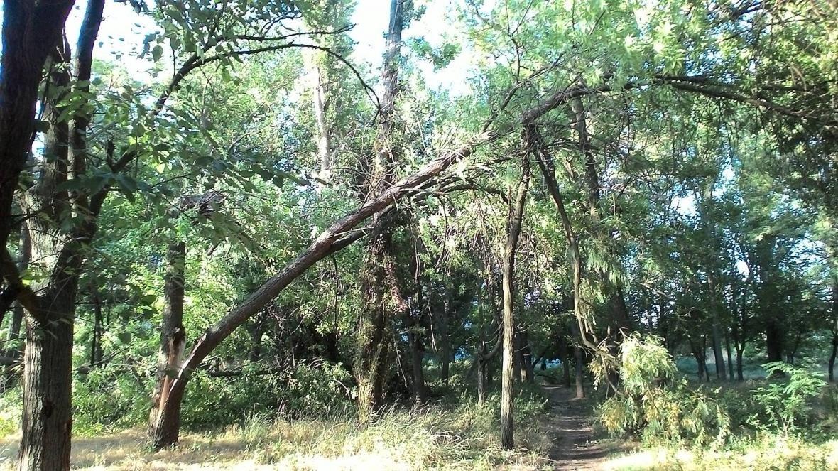 Непогода наделала бед в херсонском парке (фото), фото-3
