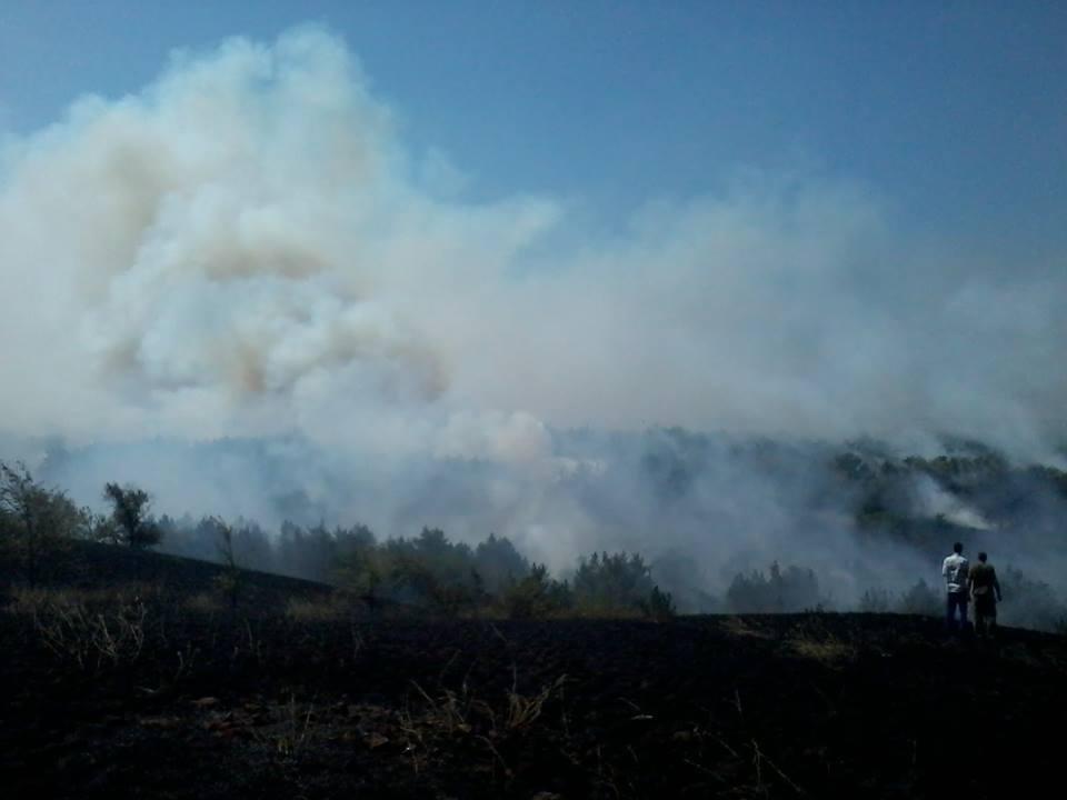 Пожежа на землях Горностаївського лісництва, фото-2
