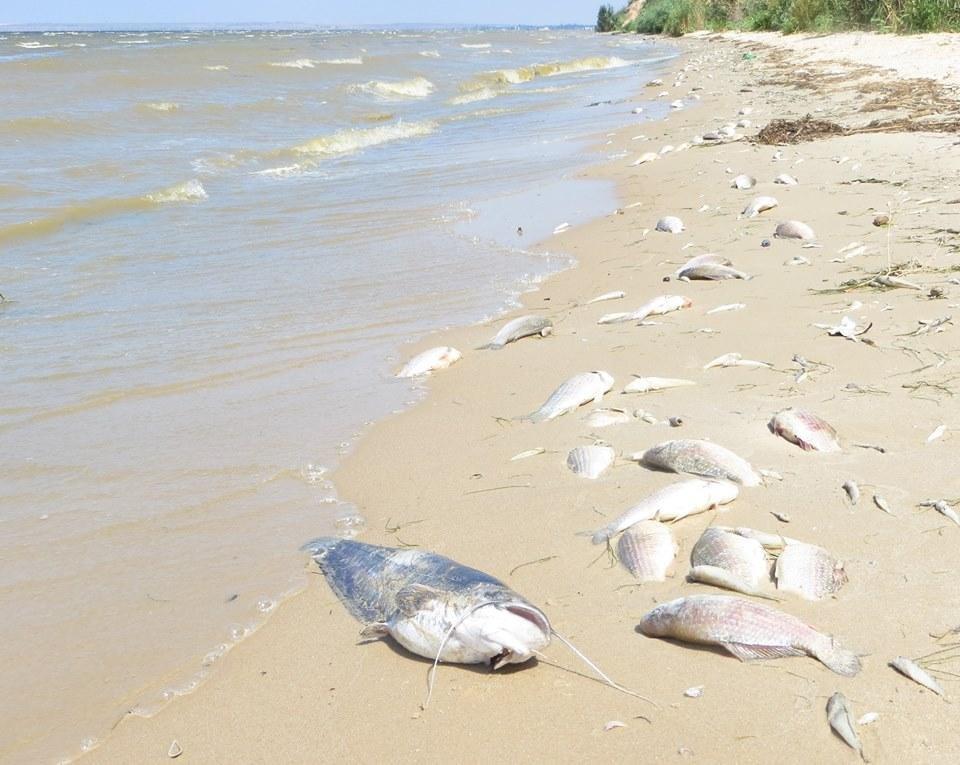 На Херсонщині спостерігається заморення риби, фото-2