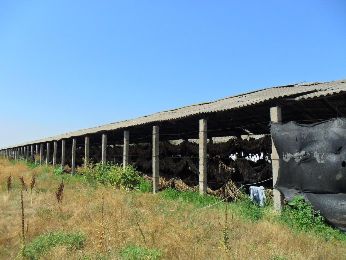 На Херсонщині знайшли «тютюнових» фермерів, фото-1