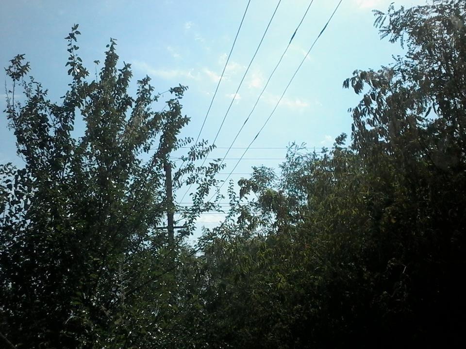 Ветер и замыкание проводов стали причиной лесного пожара на Херсонщине, фото-2