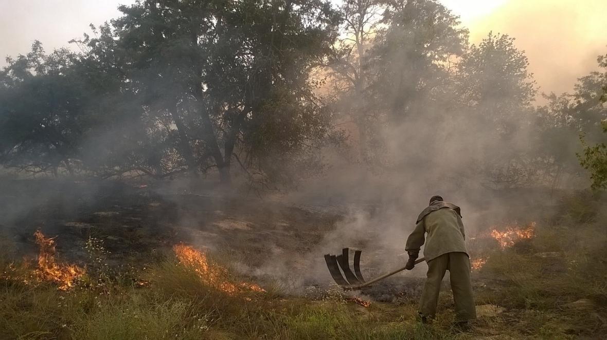 У Голопристанському районі рятувальники ліквідовують лісову пожежу, фото-1