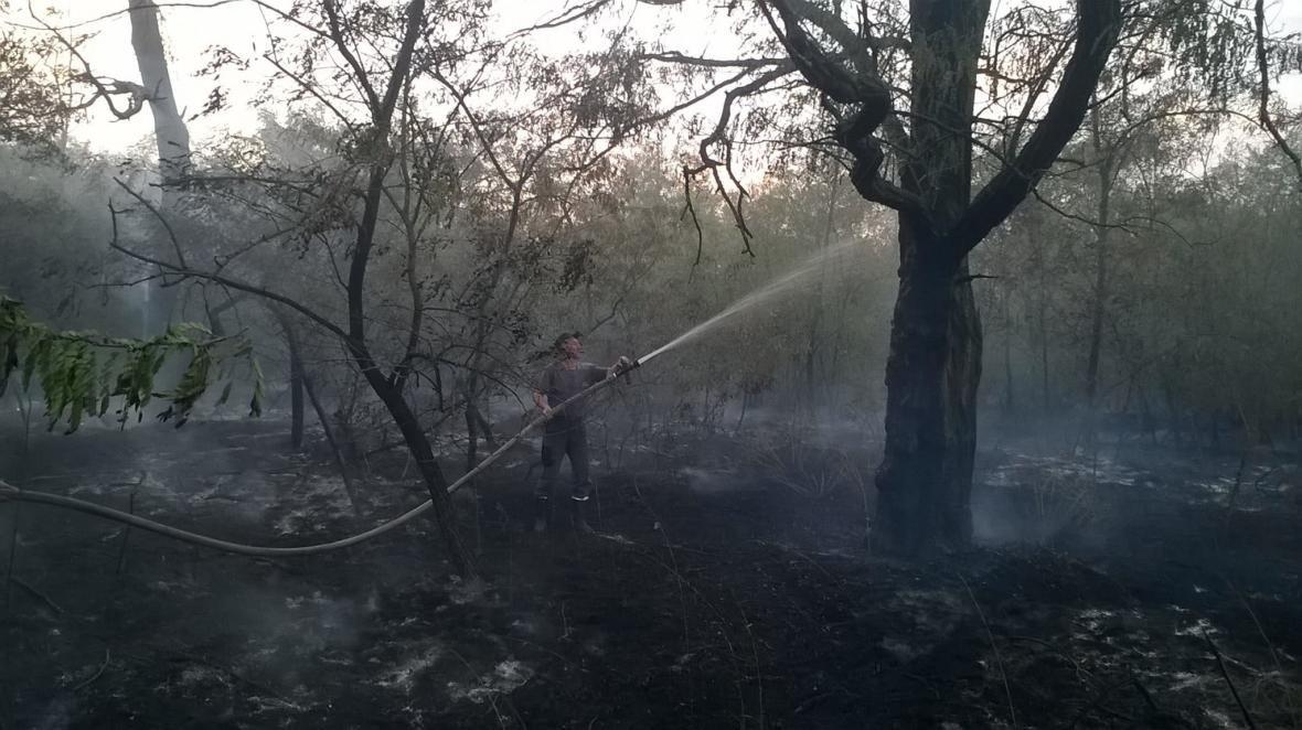 У Голопристанському районі рятувальники ліквідовують лісову пожежу, фото-2