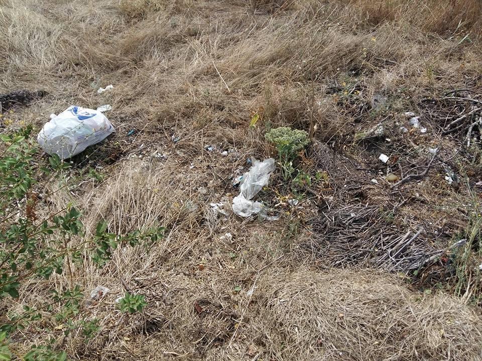 Херсонские дворники сносят мусор в парк, фото-1