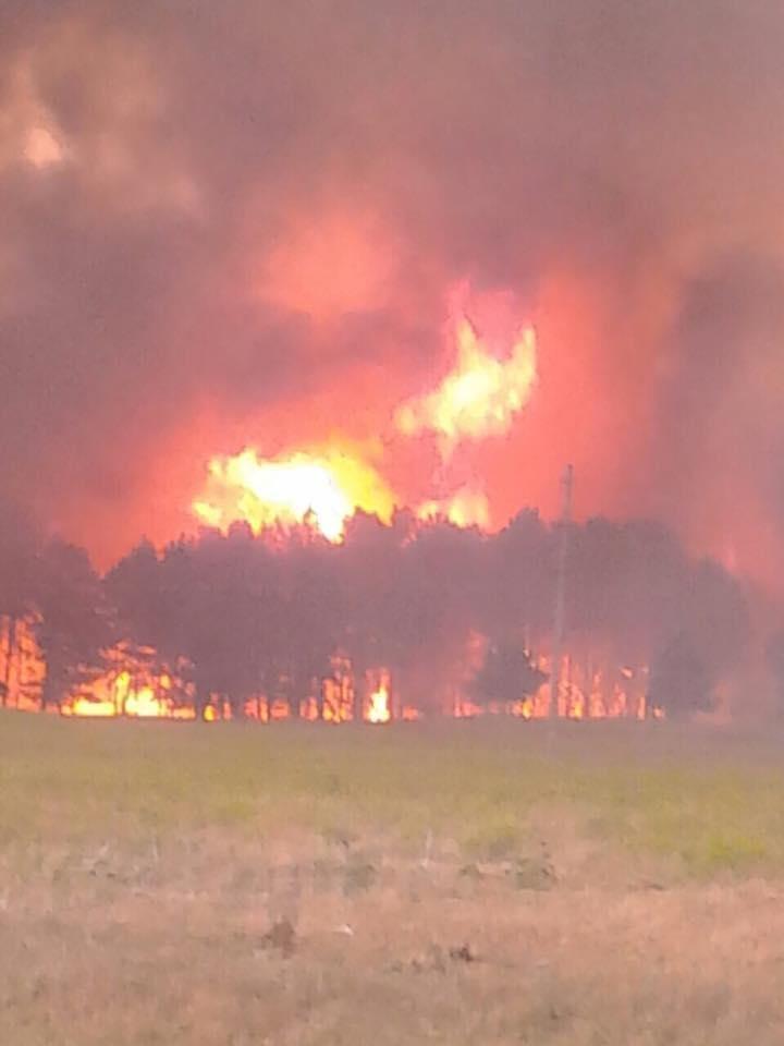 На Херсонщині горить 50 га лісу, фото-2