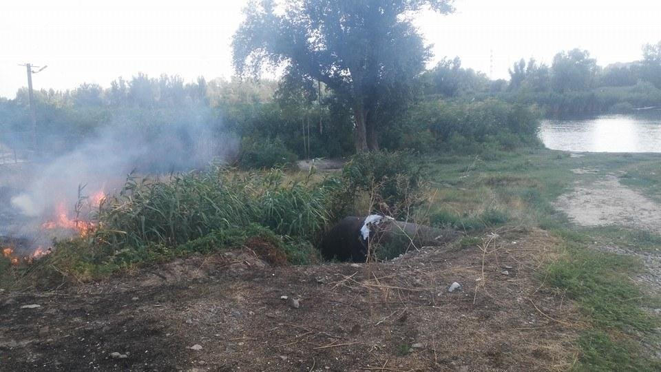 В Херсоне горит трава, фото-2
