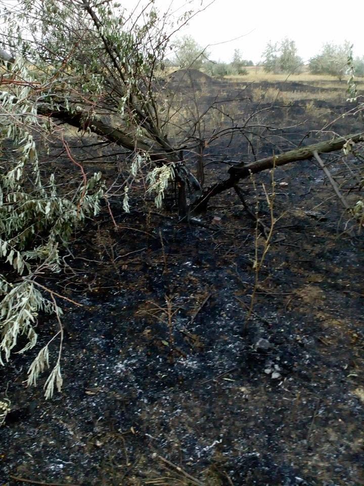 В Херсоне каждый день горит пустырь, гнезда птиц и деревья, - жалуется горожанка, фото-1