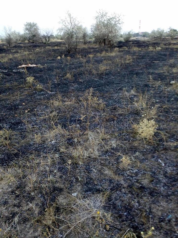 В Херсоне каждый день горит пустырь, гнезда птиц и деревья, - жалуется горожанка, фото-3