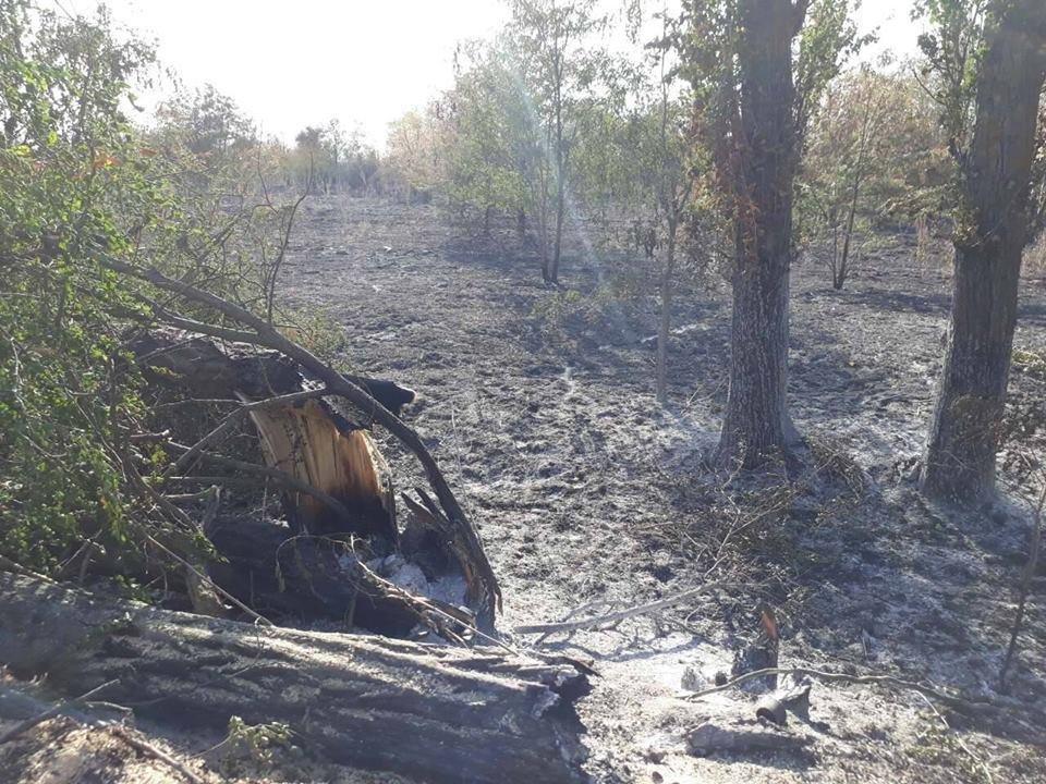 В Олешківському районі поліція продовжує боротьбу з лісовим браконьєрством, фото-2