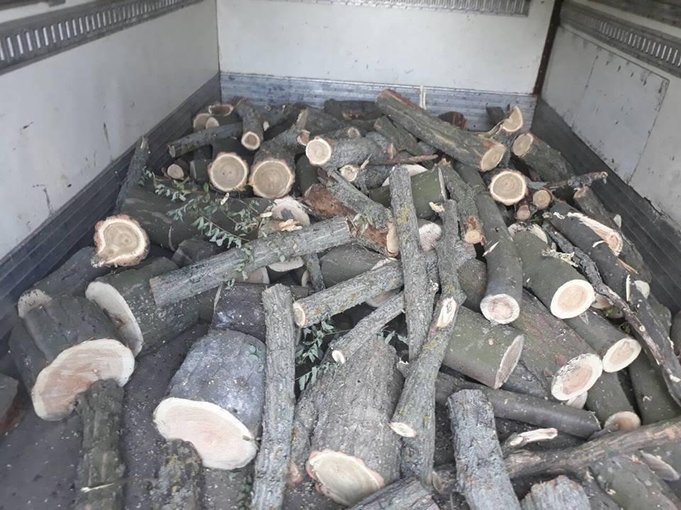 В Олешківському районі поліція продовжує боротьбу з лісовим браконьєрством, фото-1