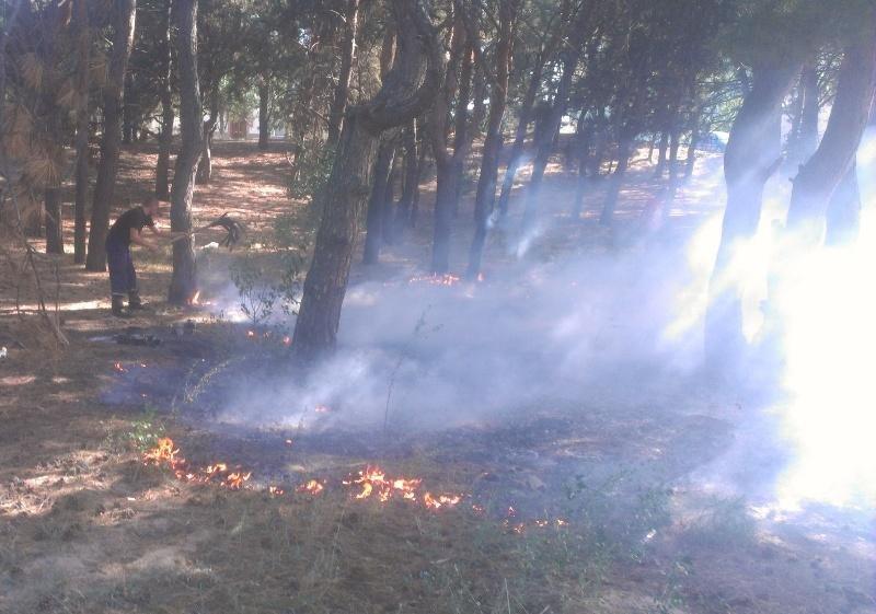 Протягом доби 12 разів горіла суха трава, фото-1