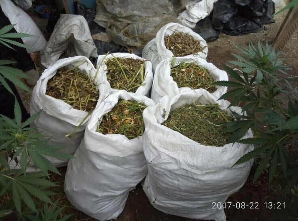 Поліція Херсонщини перекрила канал розповсюдження марихуани, фото-3