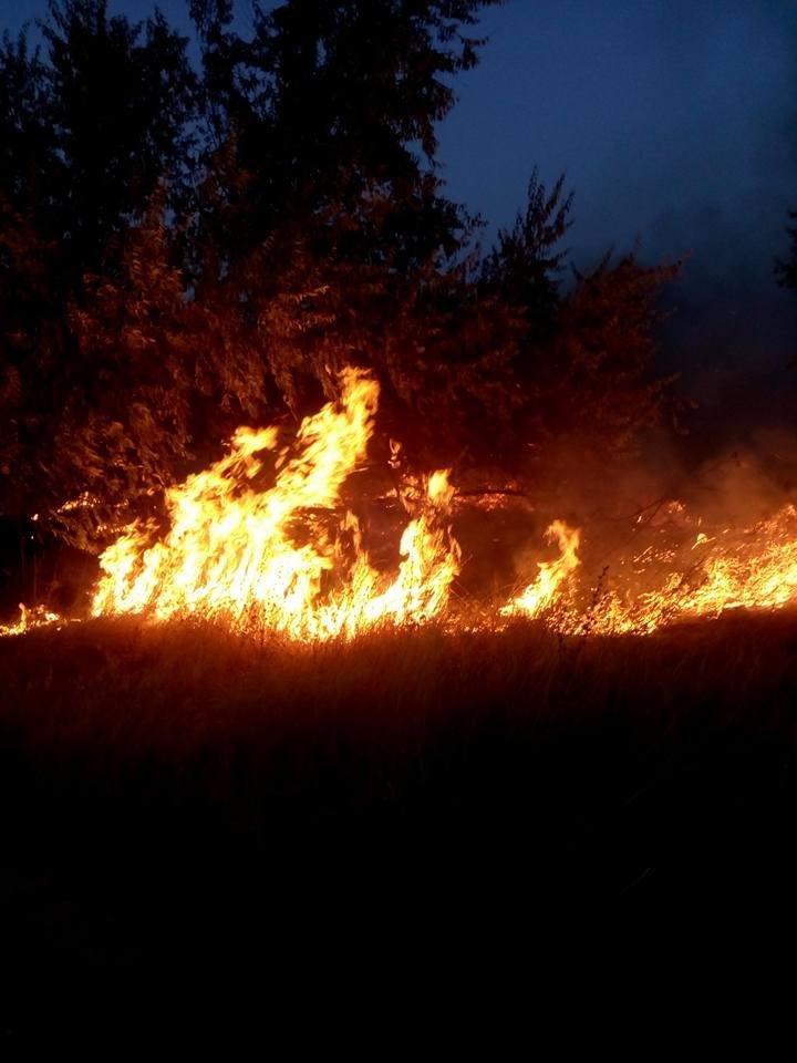 В Херсоне дети поджигают сухую траву, фото-1