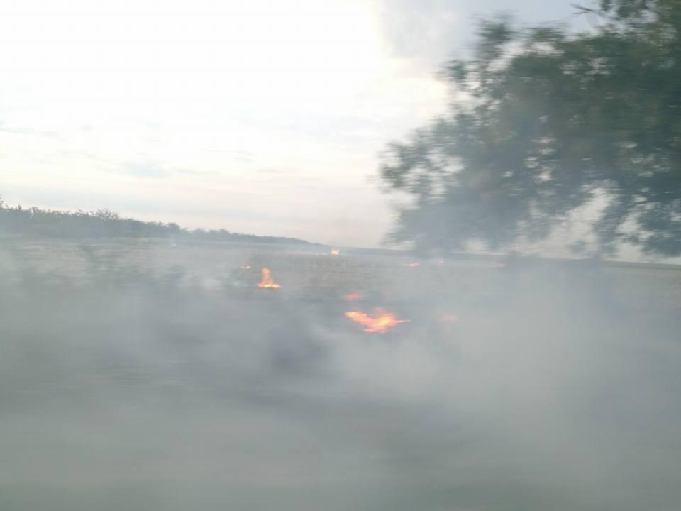 На Херсонщине снова горят поля, фото-1