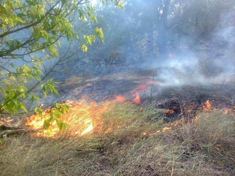 За добу в області сталося 6 пожеж в екосистемах, фото-1
