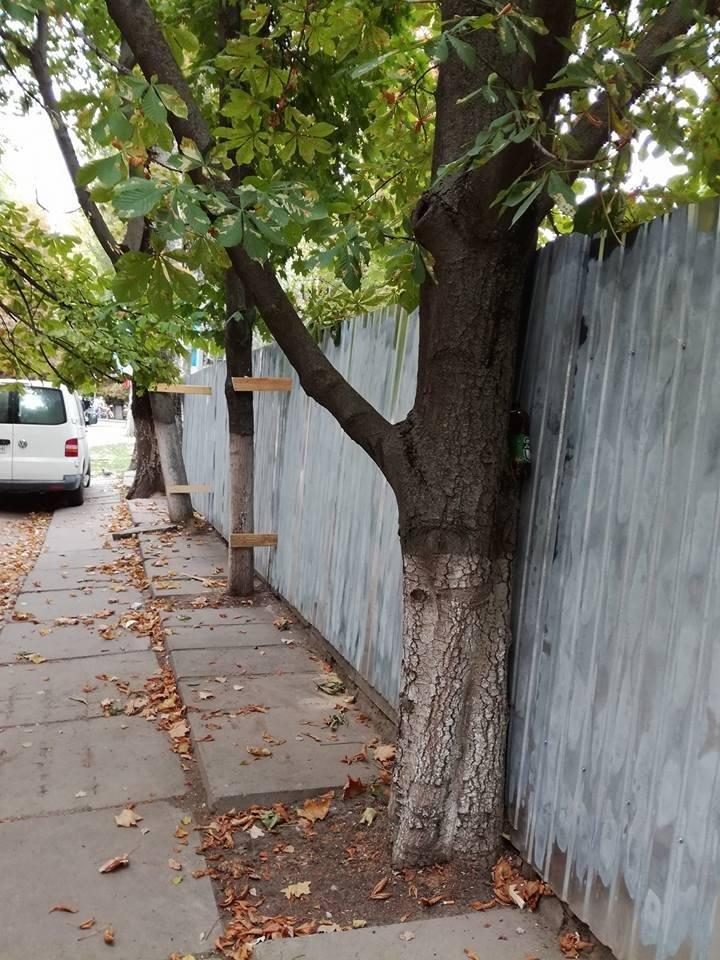 В Херсоне строители остановочного комплекса прикрепили забор к деревьям (фото), фото-5