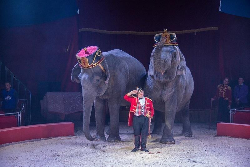 Цирковое чудо: как жители Херсона в Италии побывали, фото-9