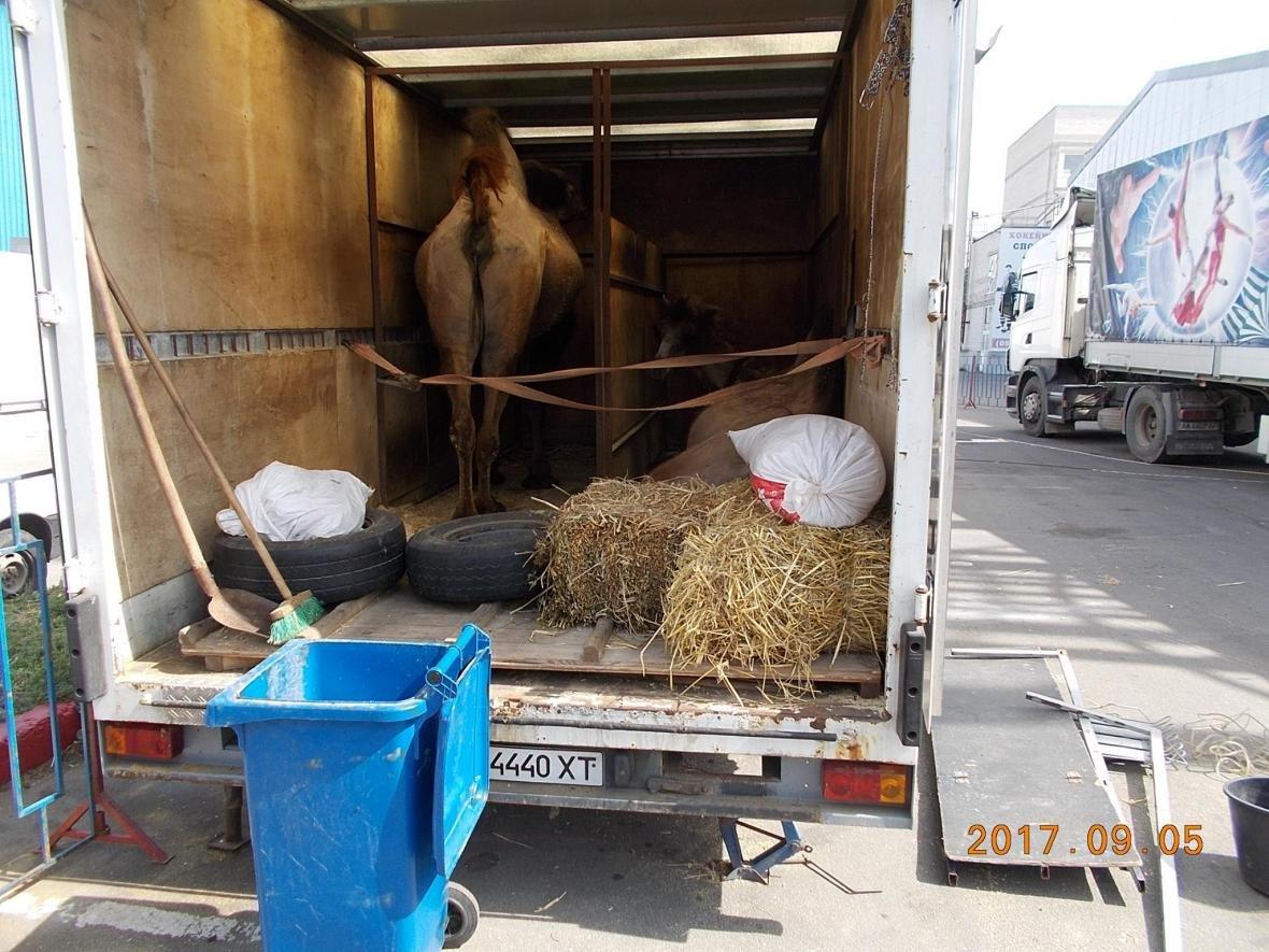 Цирк, который возмутил херсонцев, покинул город, фото-3