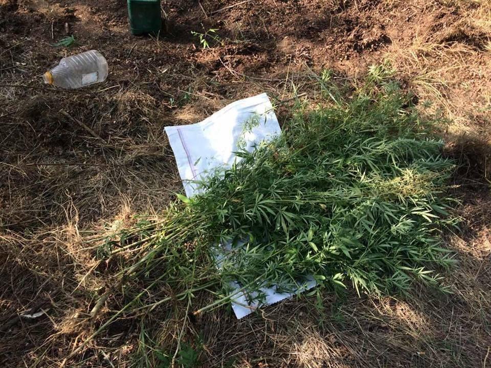 У Новій Каховці поліцейські затримали озброєного охоронця конопляної плантації, фото-1