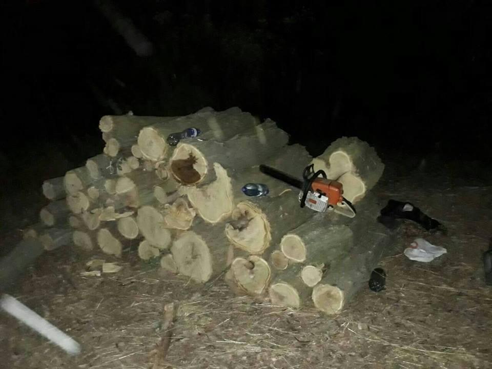 В Олешківському районі поліцейські затримали двох чоловіків під час незаконної заготівлі деревини, фото-1