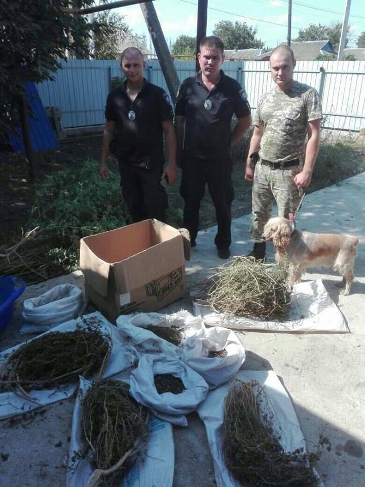 На Херсонщині поліція спільно з прикордонниками виявили насадження конопель, фото-1