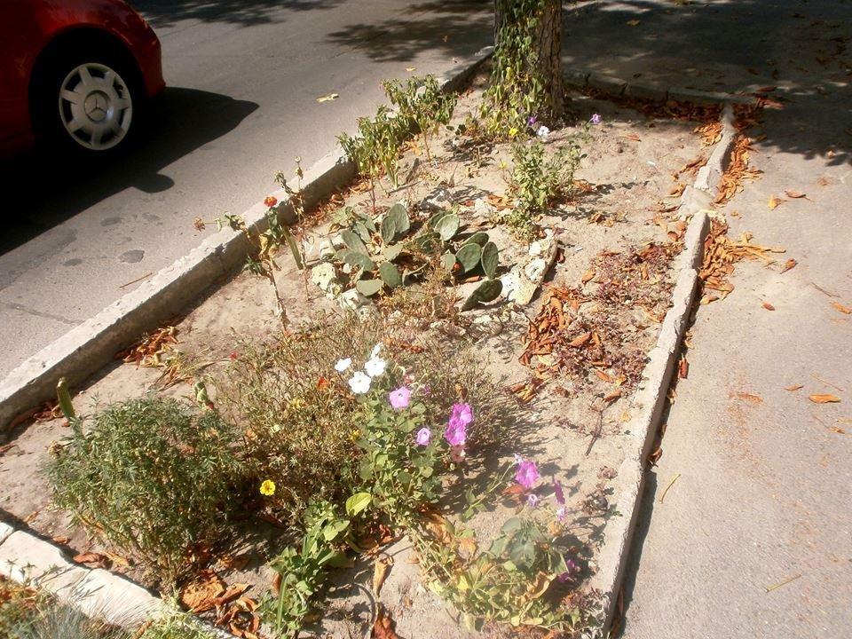 От херсонской жары вянут даже кактусы, фото-1