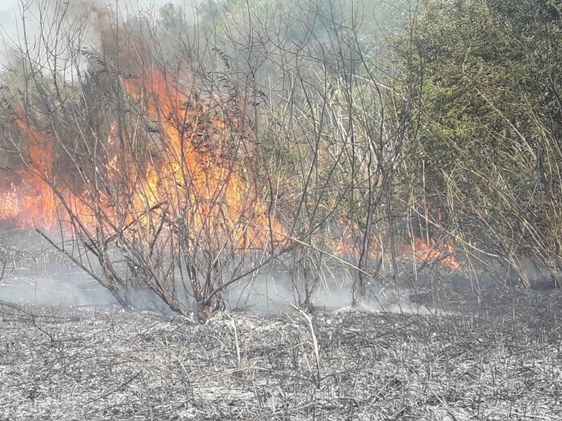 Новокаховські пожежні тричі гасили займання сухостою, фото-1